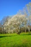 Spring season is coming Stock Photos