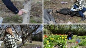 Spring season garden works. Woman gardener. clips collage. Gardener whitening tree trunk. Fruiter prune. Woman uncover rose plant. Flower bed weeding. Montage of stock footage