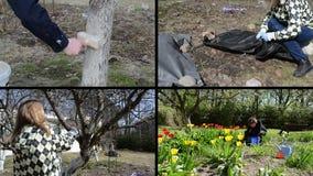 Spring season garden works. Woman gardener. Video clips collage. Gardener whitening tree trunk. Fruiter prune. Woman uncover rose plant. Flower bed weeding stock video footage