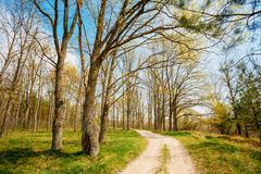 Free Spring Season In Park. Green Young Grass, Trees On Blue Sky Back Stock Image - 45986021