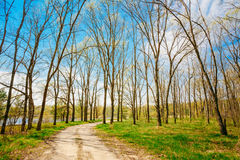 Free Spring Season In Park. Green Young Grass, Trees On Blue Sky Back Stock Photos - 47999193