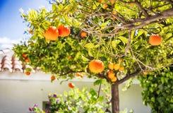 Free Spring Season In Spain Stock Images - 116993844