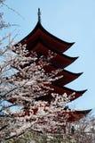 Spring season in japan Stock Image