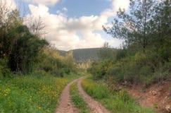 Spring season landscape Stock Images