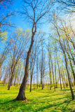 Spring Season In Park. Green Young Grass, Trees On Blue Sky Back Royalty Free Stock Photo