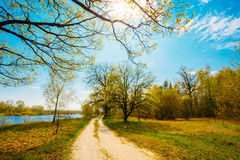Spring Season In Park. Green Young Grass, Trees On Blue Sky Back Stock Photography