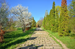 Park alley in spring season Stock Photography