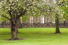 Spring season. Tree garden in spring season Stock Photos