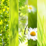 Spring seasonal collage Stock Photo