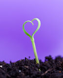 Spring seedling in shape of heart Stock Photography
