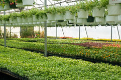 Spring seedlings in nursery. A view of fresh, new spring seedlings and green potted plants growing in a nursery greenhouse or hothouse Stock Photography