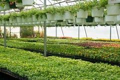 Spring seedlings in nursery Stock Photography