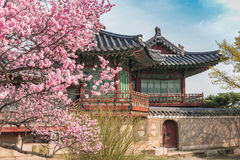 Spring in Seoul South Korea. Spring Cherry Blossom at Changdeokgung Palace, Seoul, South Korea Royalty Free Stock Photo