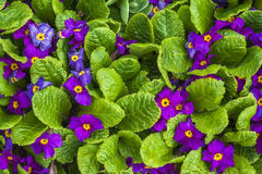 Flower floral purple tiny spring plants nature Stock Images