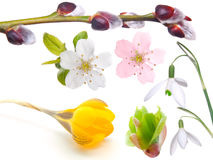 Spring set Stock Images