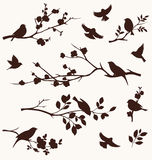 Spring set of bird and twigs silhouettes. Floral branches with birds Royalty Free Stock Image