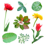 Spring set of leaves and flowers Royalty Free Stock Image
