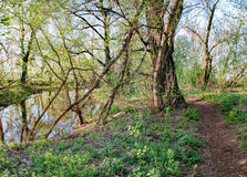 Spring shady forest and small river, Ukraine Royalty Free Stock Photos