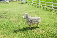 Spring Sheep Stock Image