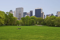 Spring Sheep Meadow Royalty Free Stock Photo