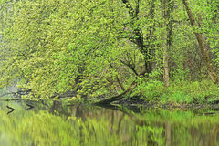 Spring Shoreline Kalamazoo River. Spring landscape of the shoreline of the Kalamazoo River, Michigan, USA Stock Image