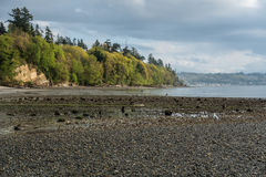 Spring Shoreline Landscape. A view of the shoreline at Saltwater State Park in Des Moines, Washington. It is Spring Royalty Free Stock Images