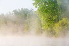 Spring Shoreline at Sunrise. Foggy spring landscape at sunrise of Jackson Hole Lake, Fort Custer State Park, Michigan, USA Royalty Free Stock Photography