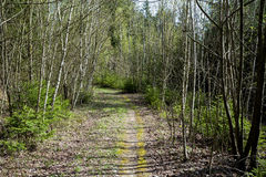 Spring shot of pathway in small young forrest Royalty Free Stock Image