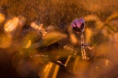 Spring Shower Stock Images