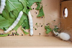 Spring silkworm Stock Image
