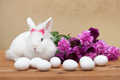 Spring simbols - white bunny waiting for easter Stock Image