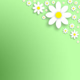 Spring simple daisy flowers background Royalty Free Stock Images