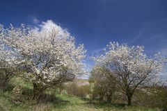 Spring Sky Background Royalty Free Stock Photos