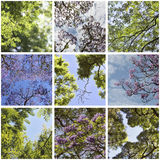 Spring sky colage. Green foliage and blossoming. Royalty Free Stock Photo