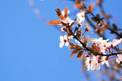 Spring Sky and Flowers Stock Images