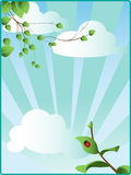 Spring sky with green leaves Stock Images