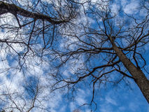 Spring sky Royalty Free Stock Photography