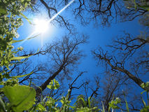 Spring sky - view from below. Sunny spring sky with wide angle fisheye lens view from below royalty free stock photo