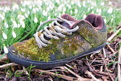 Spring sneaker Stock Photography