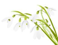 Spring sneeuwklokjebloemen op Royalty-vrije Stock Foto