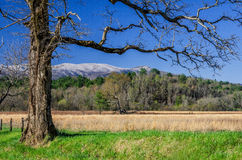 Spring snow, Cades Cove, Great Smoky Mountains. A beautiful spring snow covers the tops of the mountains seen from Cades Cove in the Great Smoky Mountain Stock Photos