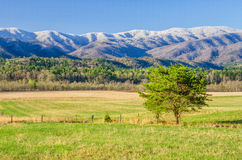 Spring snow, Cades Cove, Great Smoky Mountains. A spring snow caps the mountains over Cades Cove in the Great Smoky Mountain National Park Royalty Free Stock Photo