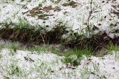 Spring snow Royalty Free Stock Photography