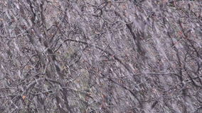 Spring Snow Falling. In Front of Trees stock video footage