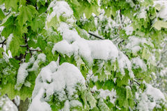 Spring snow Royalty Free Stock Images