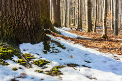 Last snow Royalty Free Stock Photography