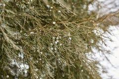 Spring Snow Storm in Chautauqua Park royalty free stock photo
