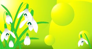 Spring snowdrop card vector Stock Photography
