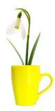 Flower in yellow mug Royalty Free Stock Image