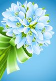 Spring snowdrop flowers with green ribbon. On blue background.  illustration Royalty Free Stock Image